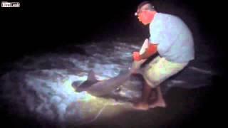 Ночная ловля акул - опасное хобби!(Классные футболки с животными ТУТ - http://c.cpa1.ru/35CV Ночная ловля акул или как поймать акулу? Кадры экстремальны..., 2012-10-09T14:40:31.000Z)