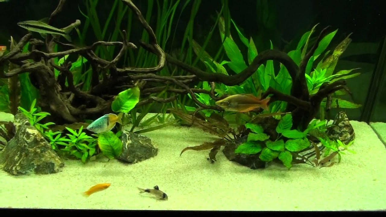 World 39 s most beautiful freshwater aquarium 2013 youtube Beautiful aquariums for home