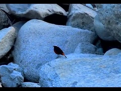 Mystery bird and the river