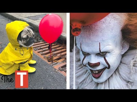20 EPIC Pet Costume Ideas For Halloween (Donald Trump, IT movie, Wonder Woman)