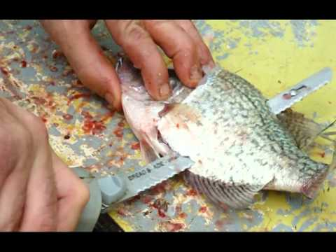 Nash cleaning a mess of crappies with a electric fillet for Fish cleaning knife