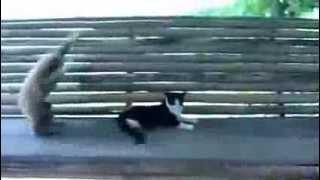 Обезьяна пристает к коту