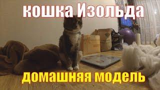Кошка Изольда - домашняя модель для видео съемок. Позирует и плохо ест - не фуа-гра, обычная печень
