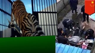 中国江西省の動物園で3月27日、飼われていた4歳のトラが男性飼育員(29...