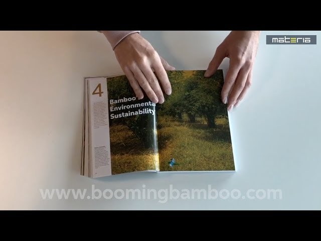 Booming Bamboo - Inside impression