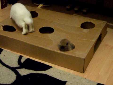 home made rabbit toys - YouTube