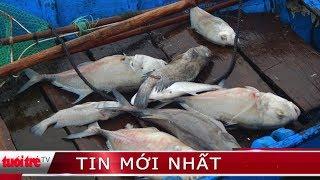 ⚡ Tin mới nhất | Cá nuôi chết hàng loạt trên đầm Cầu Hai