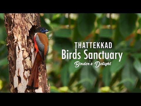 Thattekkad Bird Sanctuary,  Birder's Delight,  Birdwatching, Ernakulam, Forest