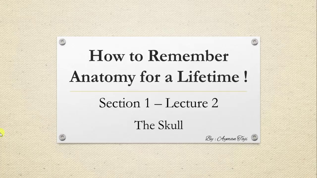 How To Remember Anatomy For A Lifetime Skull Anatomy Mnemonics