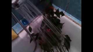 На домашний перец напала тля(, 2014-10-28T05:11:02.000Z)