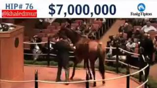Выставки лошади на аукционе