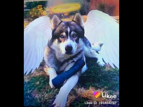 So Faze Rug Cousin Dog Just Passed Away And It S So Sad Youtube