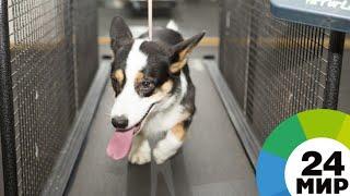 Четвероногие психологи: в Кемерове особенных детей лечат собаки - МИР 24
