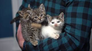 Kittens Rescued From Abandoned Hospital Two Weeks Later