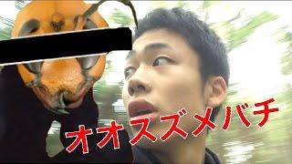 【未公開】オオスズメバチをブチ切れさせて本気逃走!
