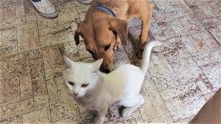 Смешные собаки Приколы про собак Funny Dogs 2019 (Наиболее Ядерные шриколы)
