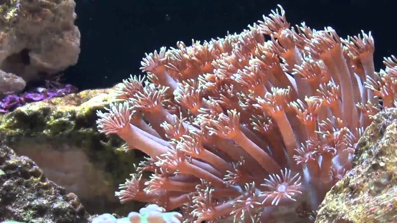 Flower pot coral time lapse youtube flower pot coral time lapse mightylinksfo