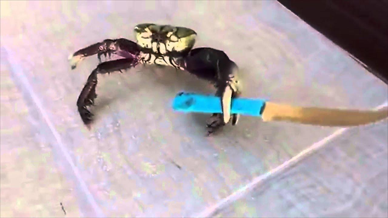 gangsta crab knife youtube