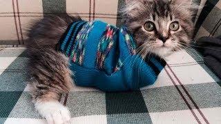 Кошечка без лапок по имени Оладушек ходит, как зайчик, и учит всех нас оптимизму!