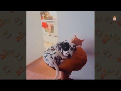 Funny Dalmatian Compilation
