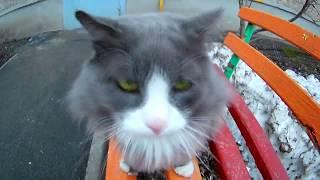 КОШКИ  ВИДЕО Прогулка с котом Филимоном