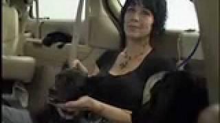 Rocket Dog Rescue, San Francisco Based Animal Rescue