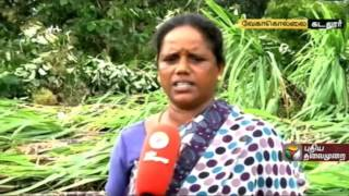 Damages Due to Heavy Rains  to Farmers in Cuddalore