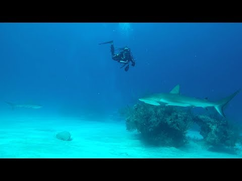 Download Youtube: Surrounded By Sharks!! NO CAGE!!