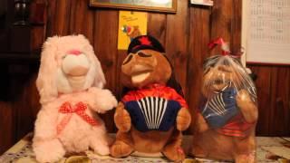 Зайцы, танцующие коты ,поющие собаки замечательные подарки на день рождения,юбилей