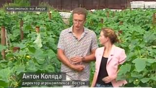 Вести-Хабаровск. Круглогодичная сельхозпродукция в Комсомольске-на-Амуре