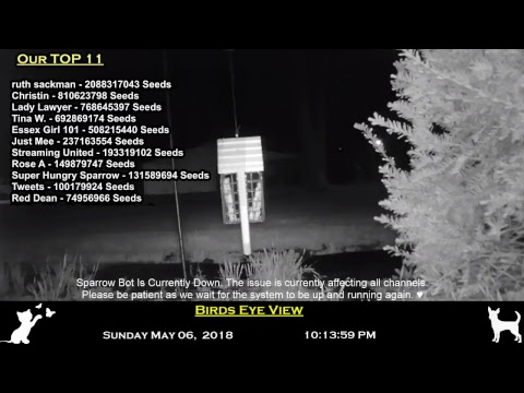 Northeast Ohio Bird-Cam and Chat with Flipcoin 24/7 Chat