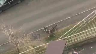 Стая бродячих собак в Краснодаре