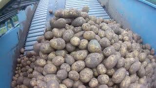 Maszyny w Akcji #16 Kopanie ziemniaków 2017
