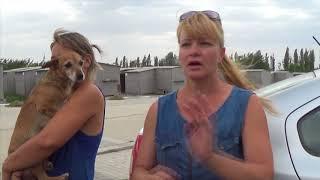 город Никополь : Прогулка по приюту для животных