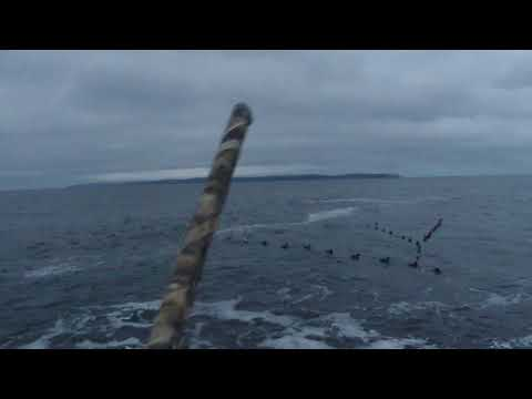 2020 01 05 Newfoundland Eider Hunt