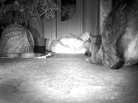 Katze Pupst Ständig