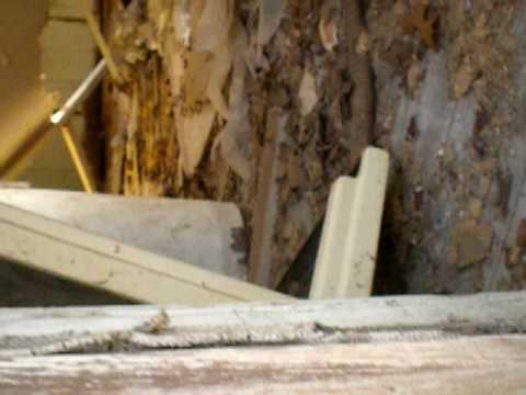 Abandoned Cabin in West Greenwich, RI