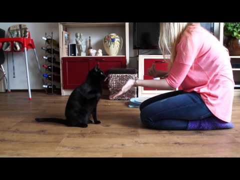 (Cat) Clicker Training with Ace