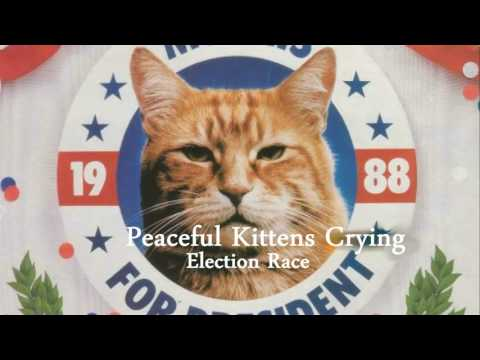 Peaceful Kittens Crying - Election Race (2004)