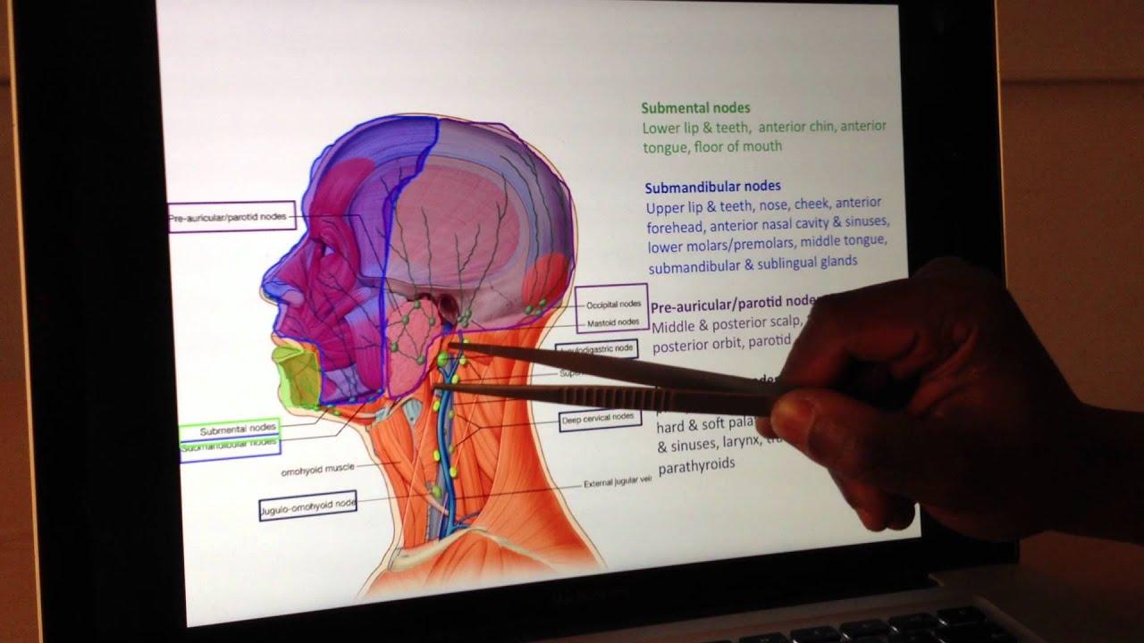 vascular anatomy 4 of 4 lymphatic drainage head and neck anatomy 101 [ 1280 x 720 Pixel ]