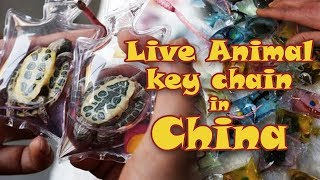 Live Animal Keychain in China(ANIMAL CRUELTY)