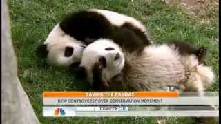 Controversy over giant panda conservation