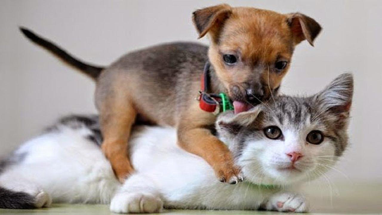 Картинки кошки и собачки прикольные