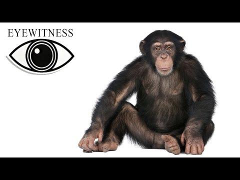 EYEWITNESS | Ape | S2E1