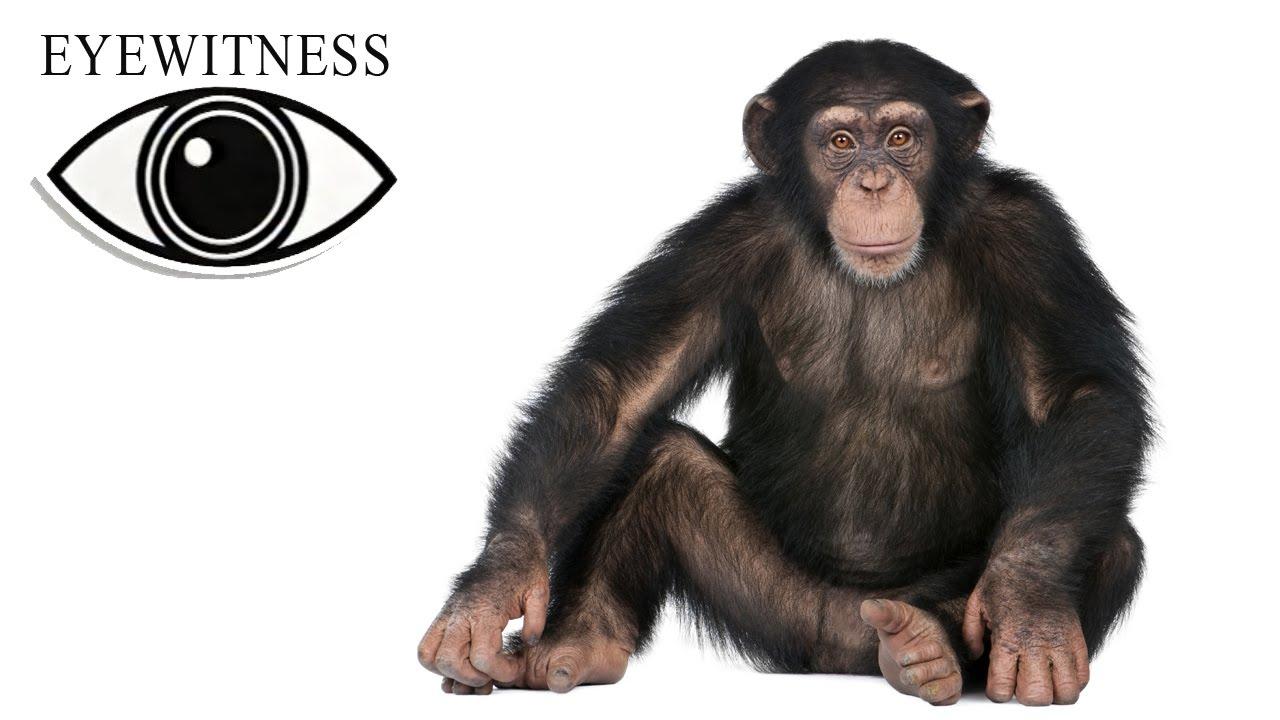 Eyewitness Serie
