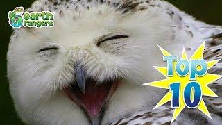 Top 10: Even Funnier Animal Jokes