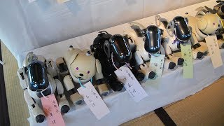 【ロボット】寿命を迎えたAIBOたち100台のお葬式