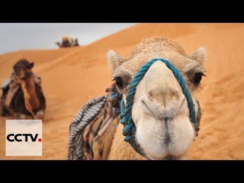 الأفلام الوثائقية: لمسة تونسية -- الحلقة السابعة: قوة الحضارة