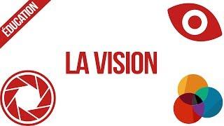 La Vision [Révisions Bac Première ES/L S.V.T Physique-Chimie]