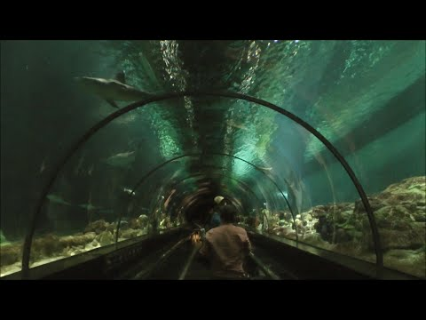 Shark Encounter, SeaWorld Orlando HD (1080p)